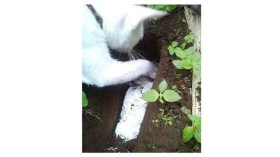 Kucing Kubur Anaknya 7c265