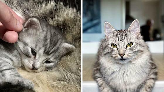 Foto Kucing Lucu Imut 9384a