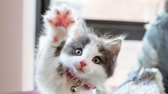 Nama Kucing Jawa E29d8