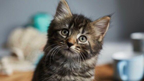 Nama Kucing Lucu Indonesia A93f9