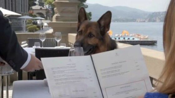 Anjing Terkaya Di Dunia 1e488