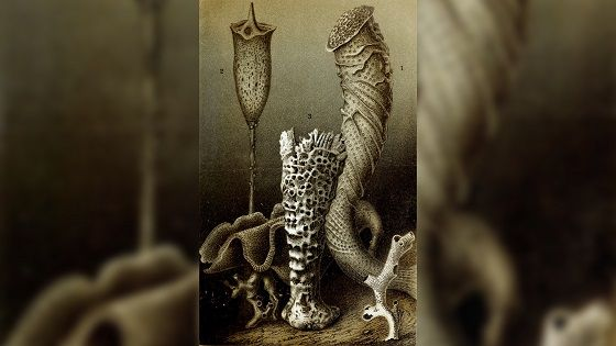 Glass Sponge History And Art Collection Db895