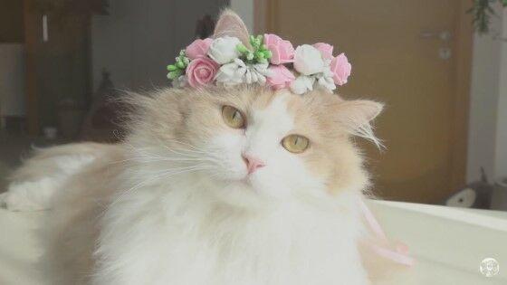 Nama Kucing Keren 52469