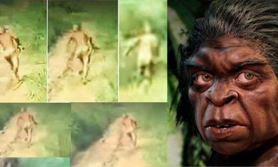 Video Suku Mante E5498