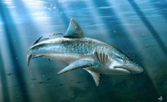 Ikan Predator Terbesar 1909c