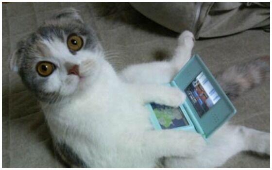 Potret Kucing Bertingkah Seperti Manusia Ds 9750a