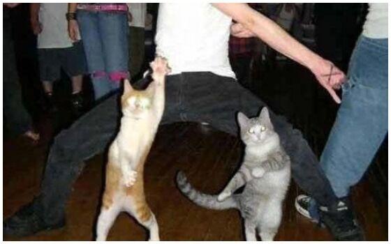 Potret Kucing Bertingkah Seperti Manusia Joget 49f84