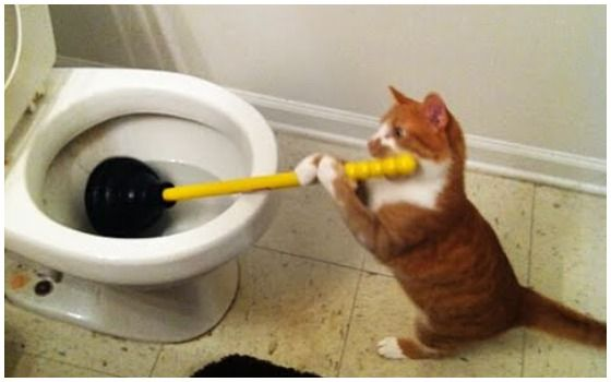 Potret Kucing Bertingkah Seperti Manusia Kucing Bersih2 Toilet C7240