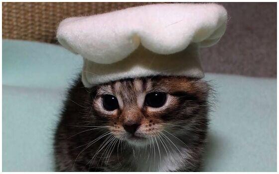 Potret Kucing Bertingkah Seperti Manusia Kucing Chef 4dfe8
