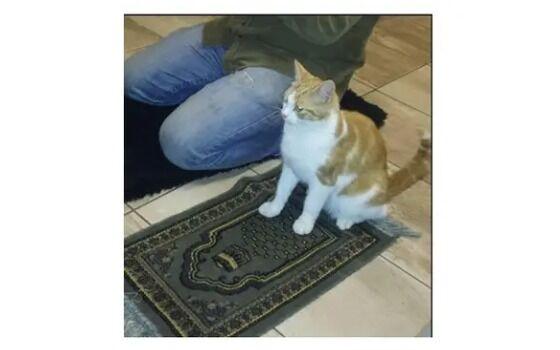 Potret Kucing Bertingkah Seperti Manusia Kucing Ibadah F59bb