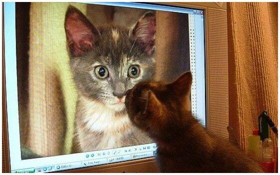 Potret Kucing Bertingkah Seperti Manusia Kucing Kangen 690e8