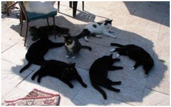Potret Kucing Bertingkah Seperti Manusia Kucing Kepanasan 6c456