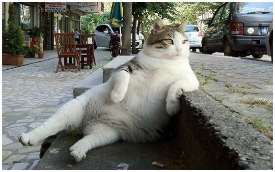 Potret Kucing Bertingkah Seperti Manusia Kucing Santai 9a61f