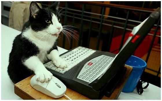 Potret Kucing Bertingkah Seperti Manusia Laptop 5443c