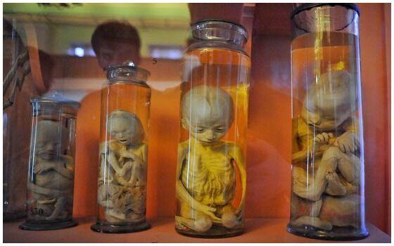 Museum Teraneh Di Dunia Museum Kuntskamera C39ee