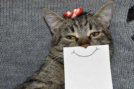 Aplikasi Tentang Kucing 2 Ec272