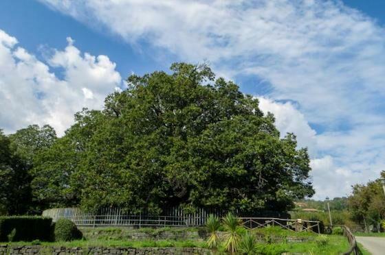Pohon Tertua Di Indonesia Yang Masih Hidup 7d0c2