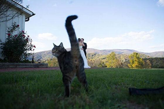 Photobomb Kucing 3