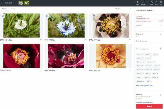 Cara Jual Foto Di Shutterstock Syarat Langkah Jalantikus