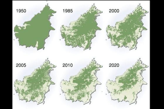Parahnya Kerusakan Hutan Kalimantan 65d08