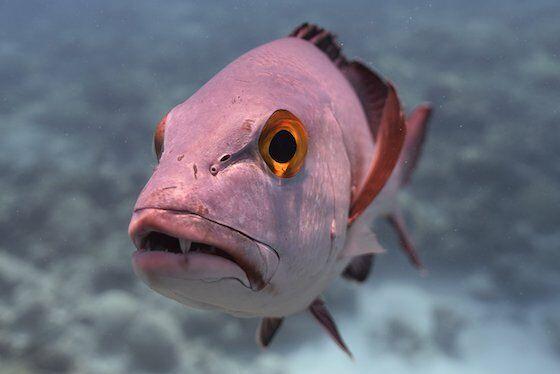 Ikan Terbesar Di Dunia 2960c