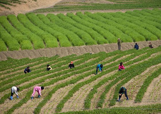 Foto Terlarang Korea Utara 9
