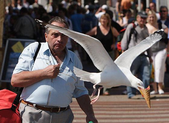 Pas Banget Good Job Burung