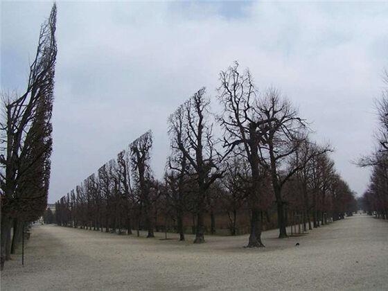 Pohon Pohon Ini Memang Sengaja Dipangkas