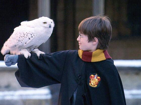 Hedwig 8e92a