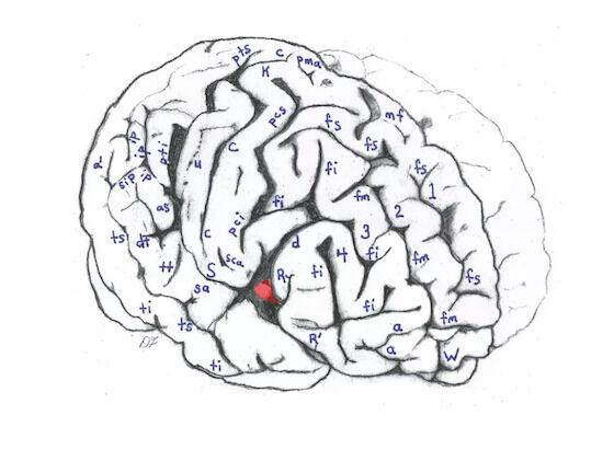 Perbedaan Otak Albert Einstein Dengan Manusia Biasa 68278