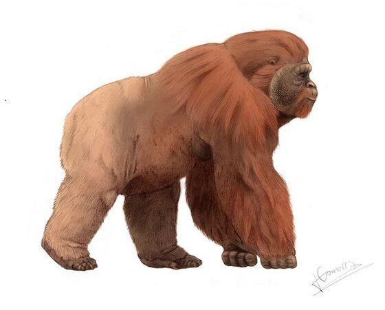 Gigantopithecus Blacki Science Focus A0f0b