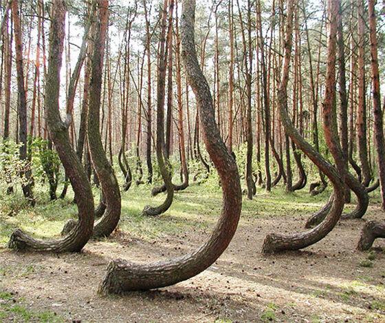 Hutan Bengkok Terletak Di West Polandia Dan Itu Benar Benar Menakjubkan