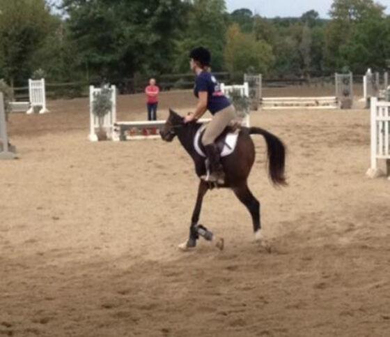 Kuda Mini