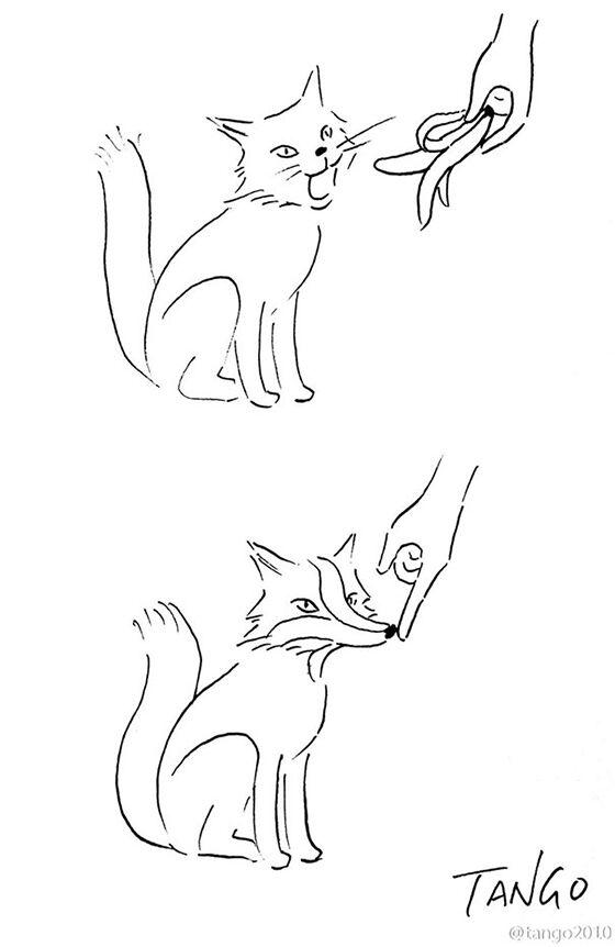 Kucing Atau Serigala