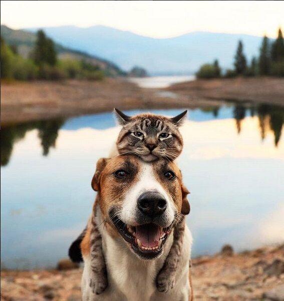 Ekspresi Kucing Terlucu Terimut Instagram 2018 3 7d783