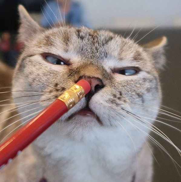 Ekspresi Kucing Terlucu Terimut Instagram 2018 7 D0bb7