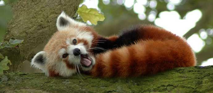 Cara Membuat Firefox Jadi Lebih Cepat