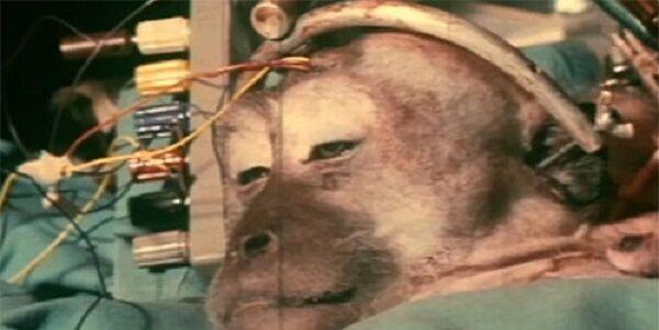 Transplantasi Kepala Monyet 0ab4a