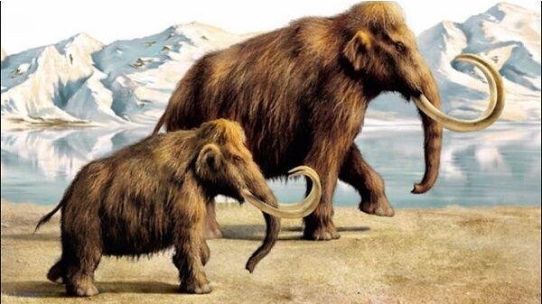 Mammoth 30e76