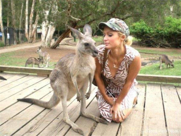 Paris Hilton Sedang Foto Bersama Kangguru Tampaknya Lagu Musim Kawin