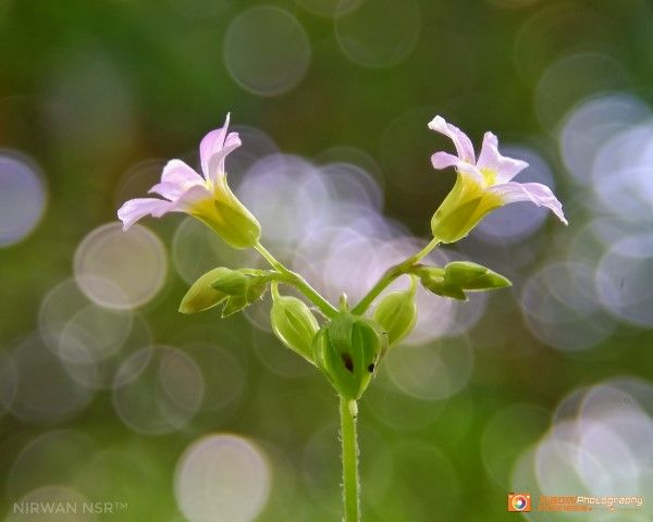 Foto Nirwan Xiaomi10