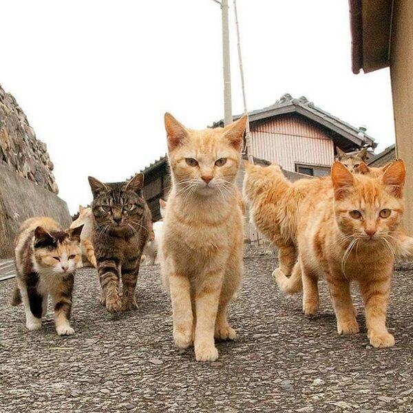 Ekspresi Kucing Terlucu Terimut Instagram 2018 9 2bcc5