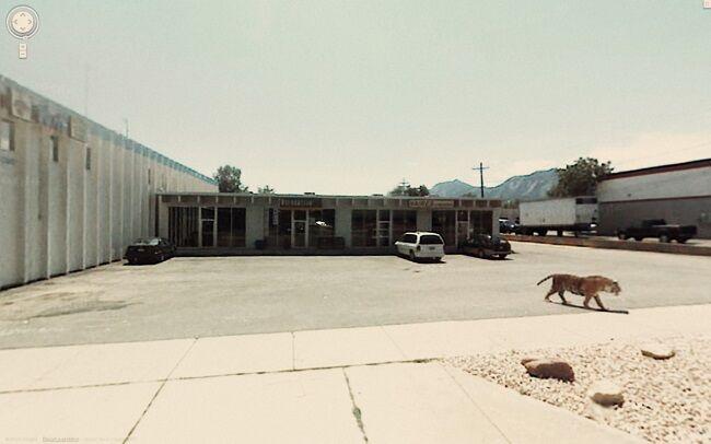 Foto Tak Terduga Google Street 10