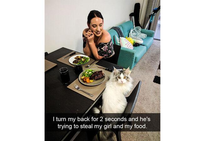 Cat15