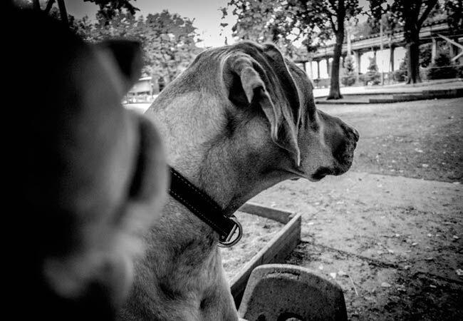 Dogfie6
