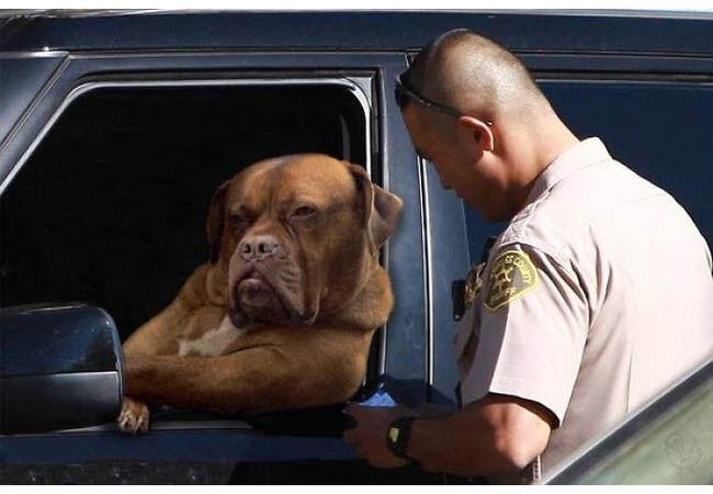 Photoshop Anjing Teranjay 1