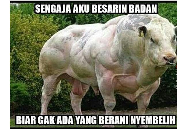 Meme Adha 9