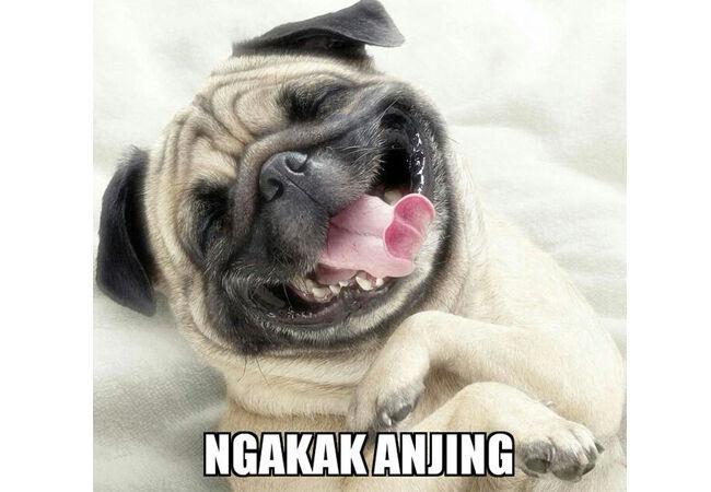 Meme Anjing 1 C2fd7