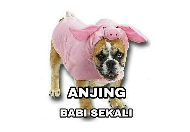 Meme Anjing 10 9fceb