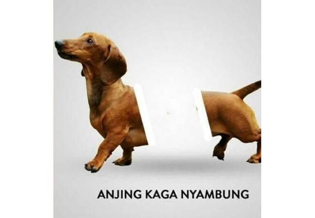 Meme Anjing 2 76622